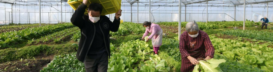 هل سيُلقي فيروس كورونا بظلاله على وضع الغذاء العالمي؟